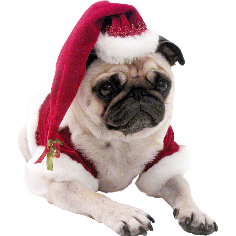 christmas-pug-dog-transparent-background