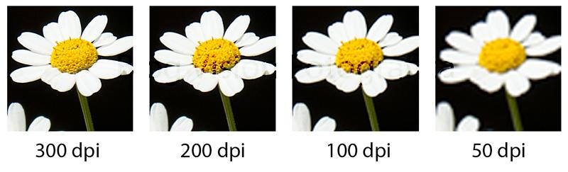 daisy-dpi